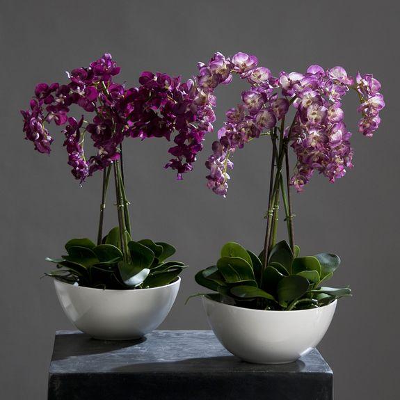 Как сделать орхидею в горшке своими руками